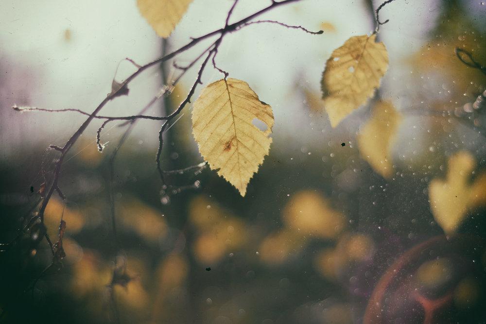 leaf rain.jpg