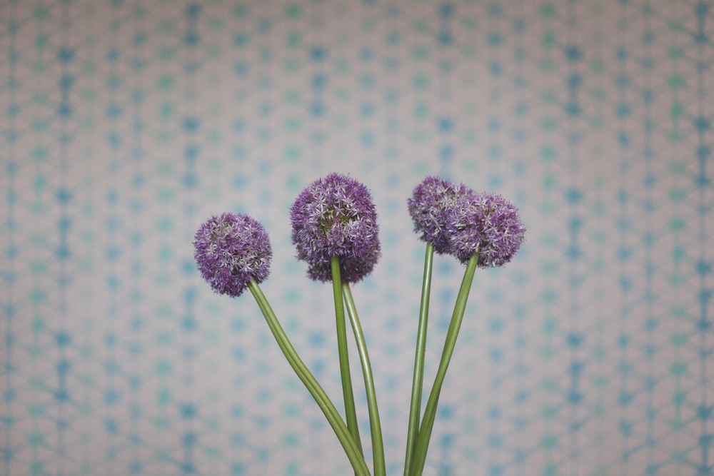 babylon-flowers-brunswick-florist-2.jpg