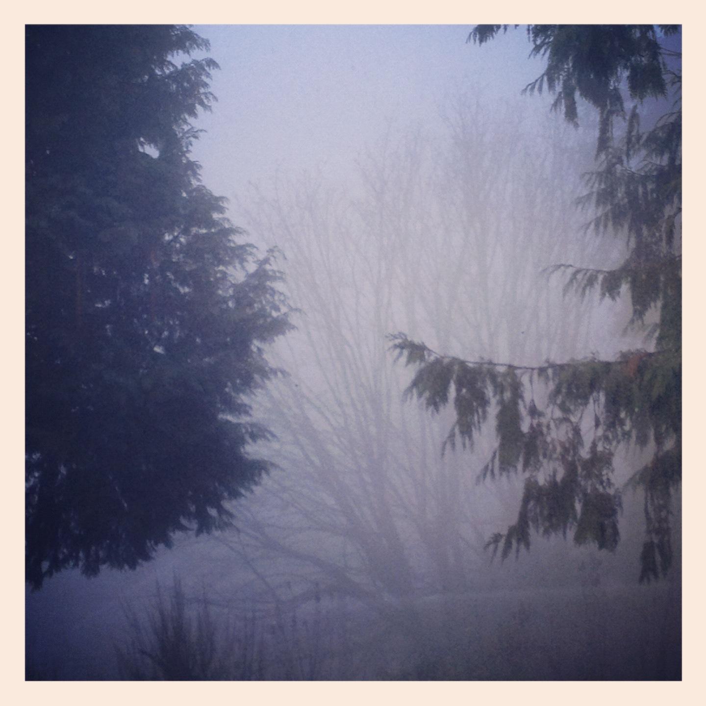 fog, a poem. lucymillerrobinson.com