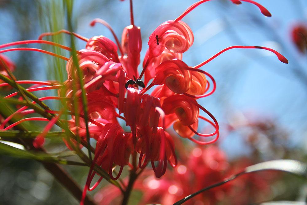 Native Australian plants. And ants.
