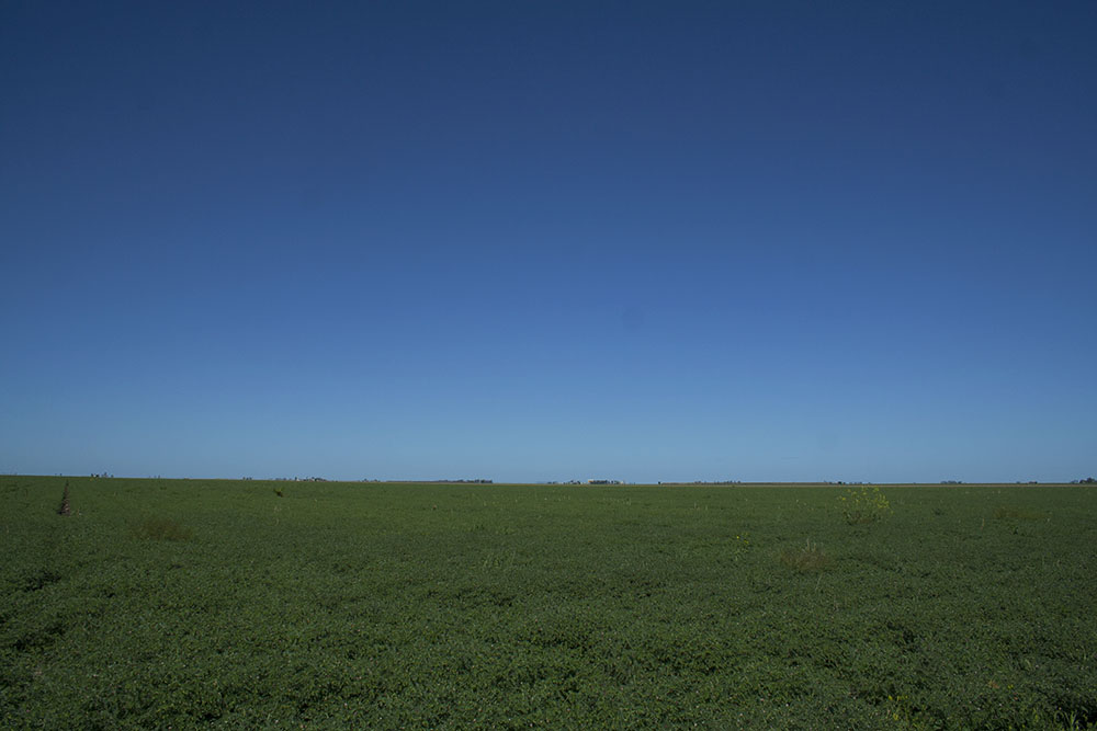 Fields in Darling Downs, near Toowoomba, Queensland