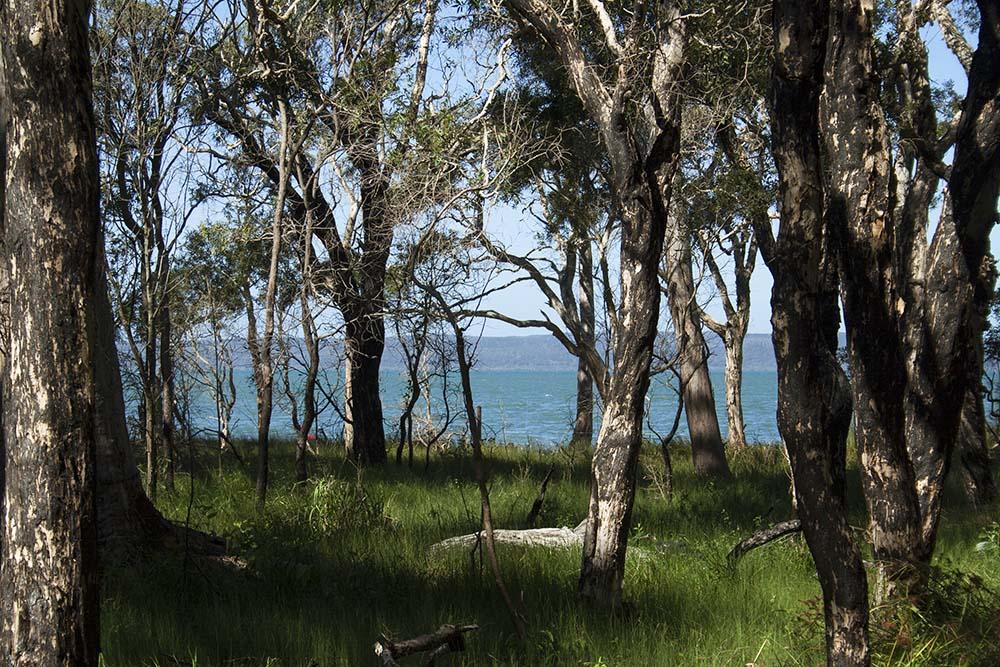 Walking through the Melalueca Wetlands around Coochiemudlo Island, Queensland