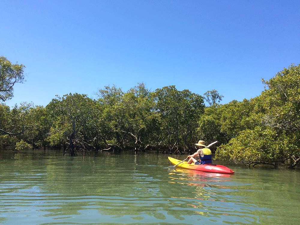 Magical mangroves of Coochiemudlo Island