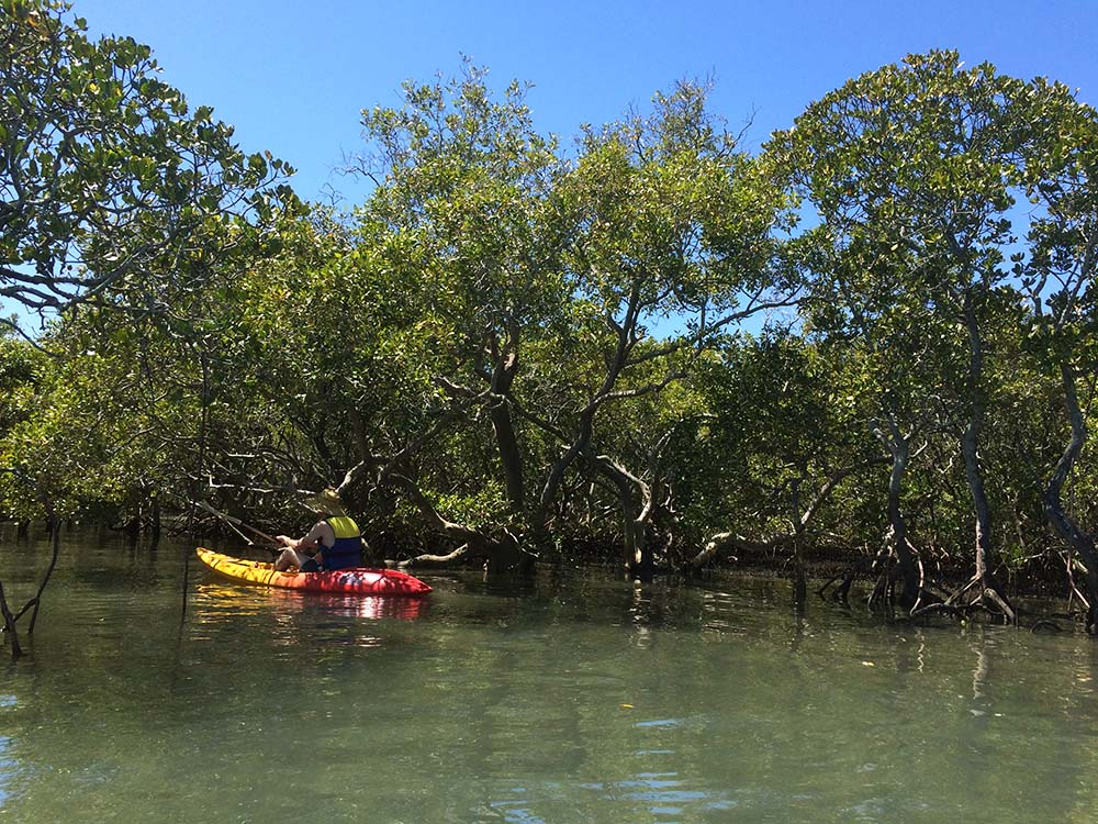 Lovely, magical mangrove forest of Coochiemudlo, Island.
