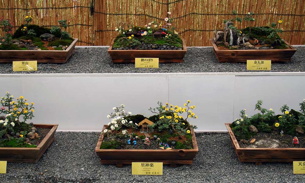 A plant display