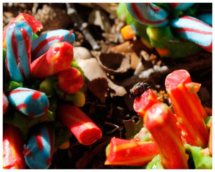 candy garden. Hard Candy Blossoms. Garden