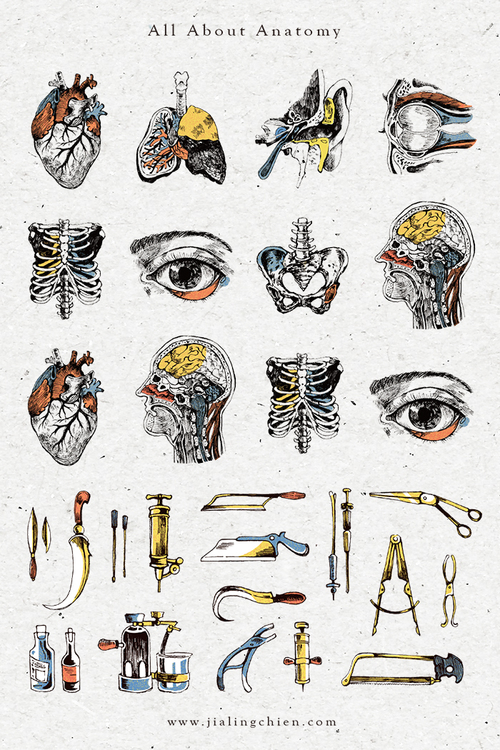 All About Anatomy Images Human Body Anatomy