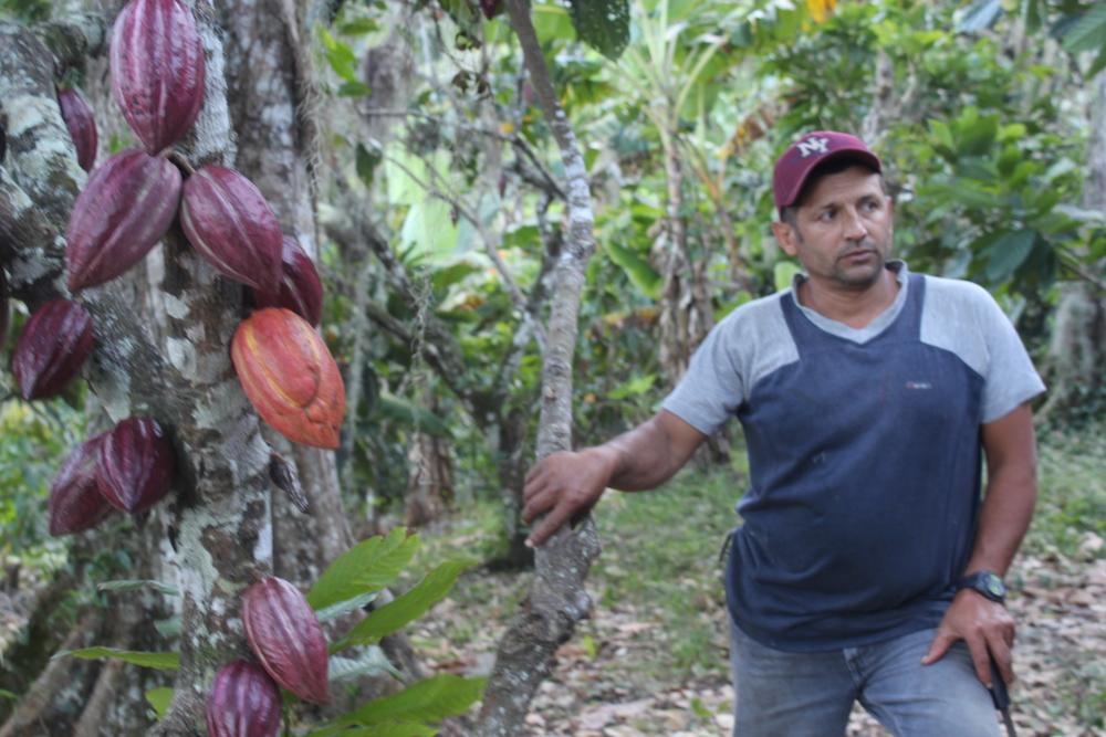 Vice Versa:  Tussen koffieboeren en gretige kopers    (Nicaragua)   ,Onder de noemer Café y Cacao werken publieke en private partners in Nicaragua samen om koffie- en cacaoboeren toegang te geven tot de duurzame markt. Handelsbedrijf Ecom investeert, SNV bemiddelt en treedt op als waakhond van eerlijke verhoudingen.'  Lees meer...