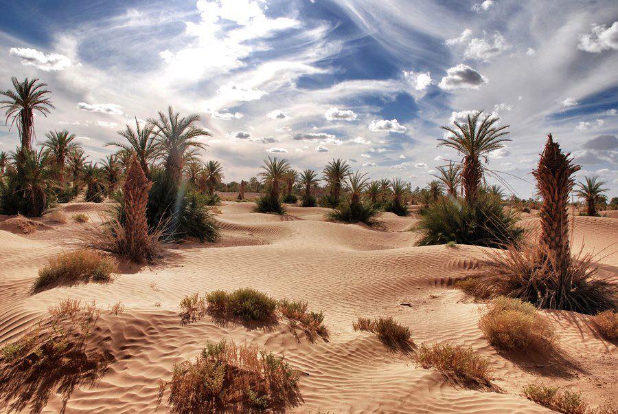Desert & Oases