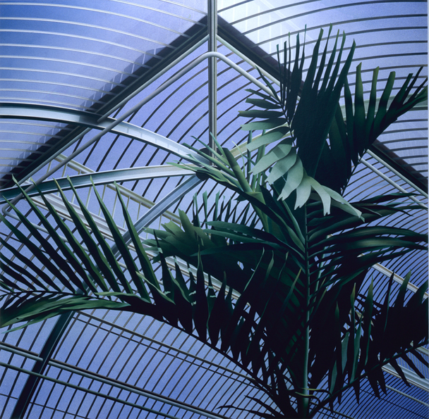 Palm House II