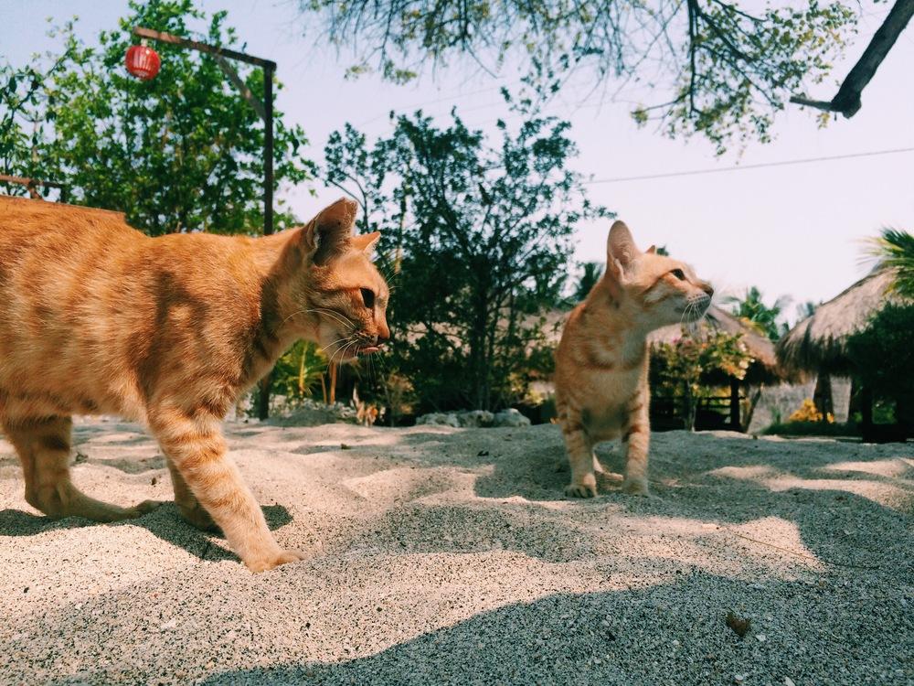 Meow on Gili Air