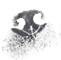 W-Ink-Nose-print.jpg