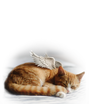 Euthabag Pet Body Bag \ Housse mortuaire pour animaux
