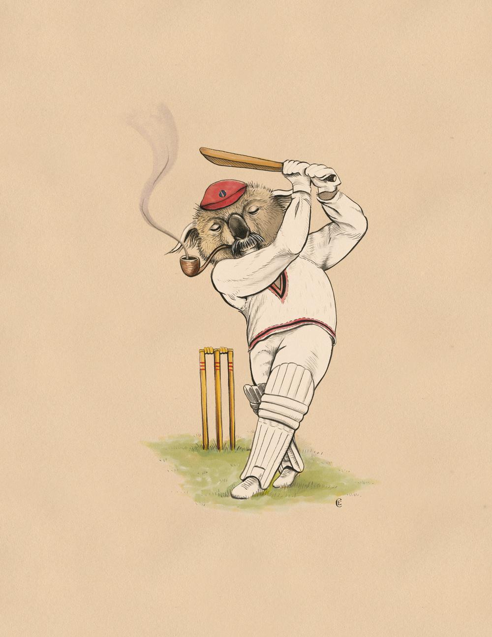 koala-batsman-cricket.jpg