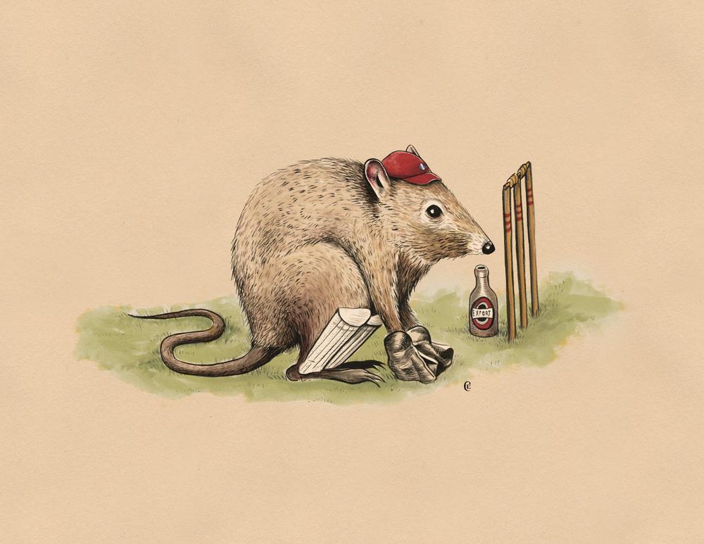 poteroo-wicket-keeper-cricket.jpg