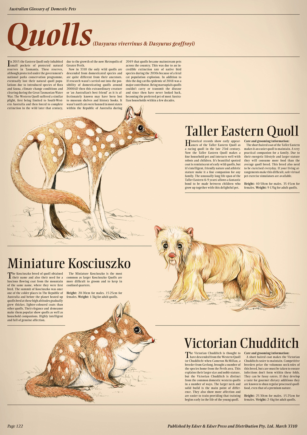 quoll-breeds-domestic-australian-animals.jpg