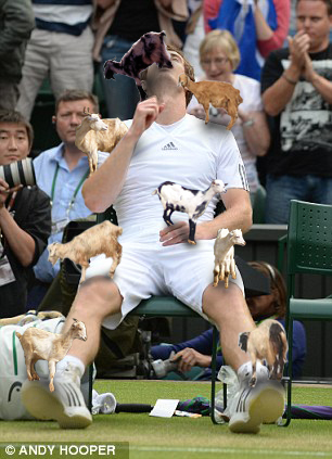 Andy Murray vs Tree Goats whatsmurrayholding: Especially for Scuba Stephen Cooke