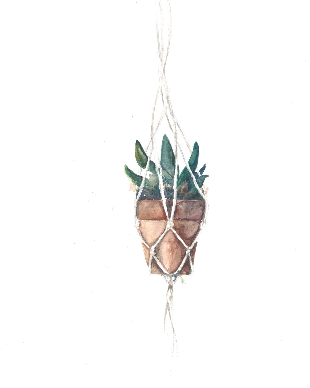 Succulents and Macrame 1