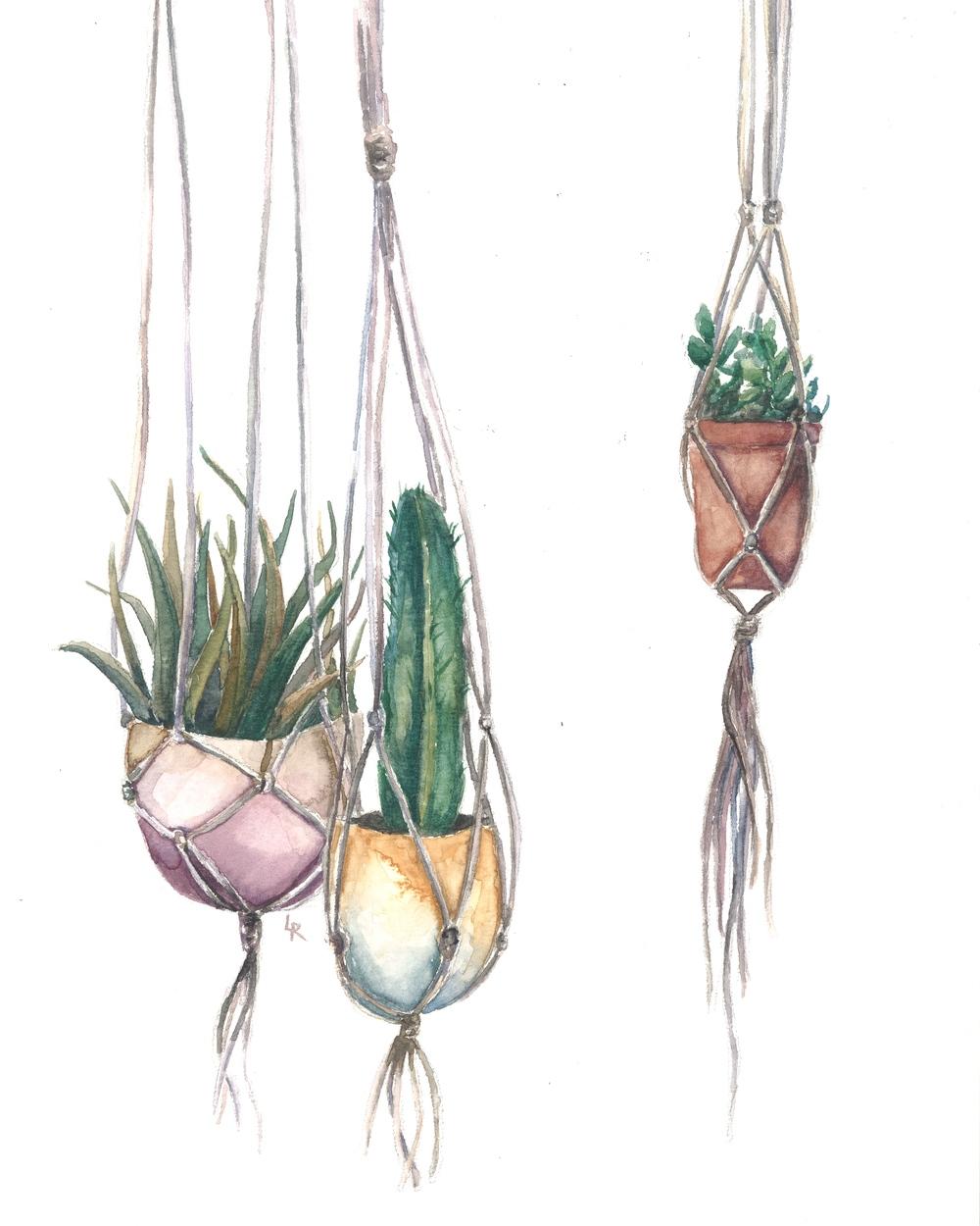 Succulents & Macrame 3