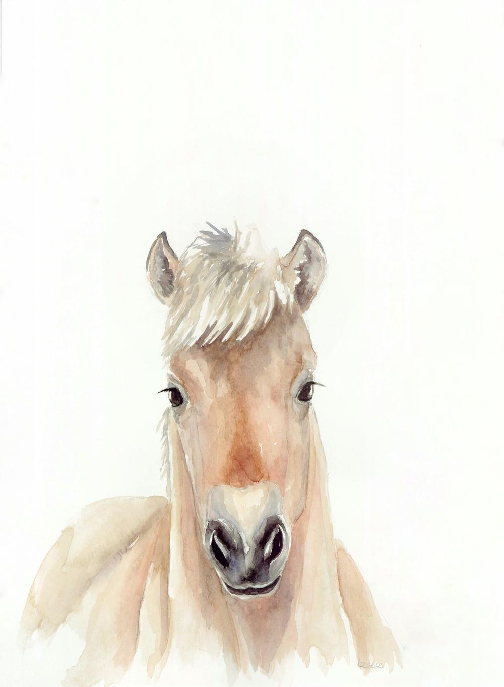 Baby Horse.jpeg