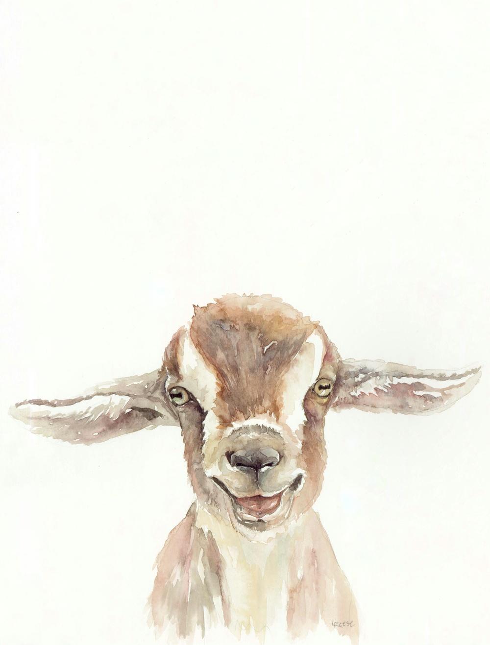 Baby Goat.jpeg