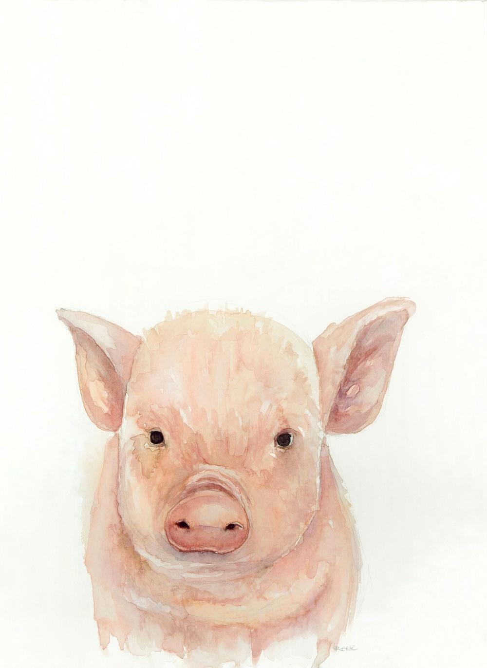Baby Pig.jpeg