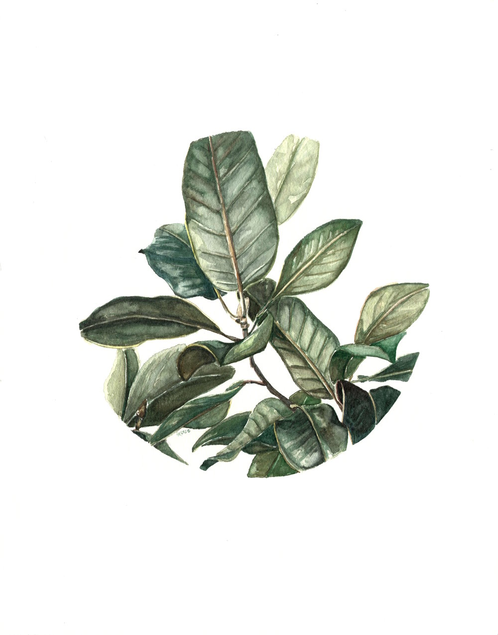 Magnolia Leaves.jpg