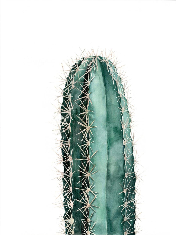 Cactus final.jpeg
