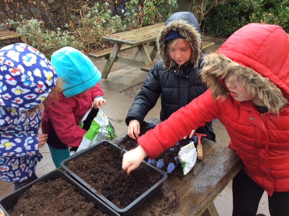 Using good compost