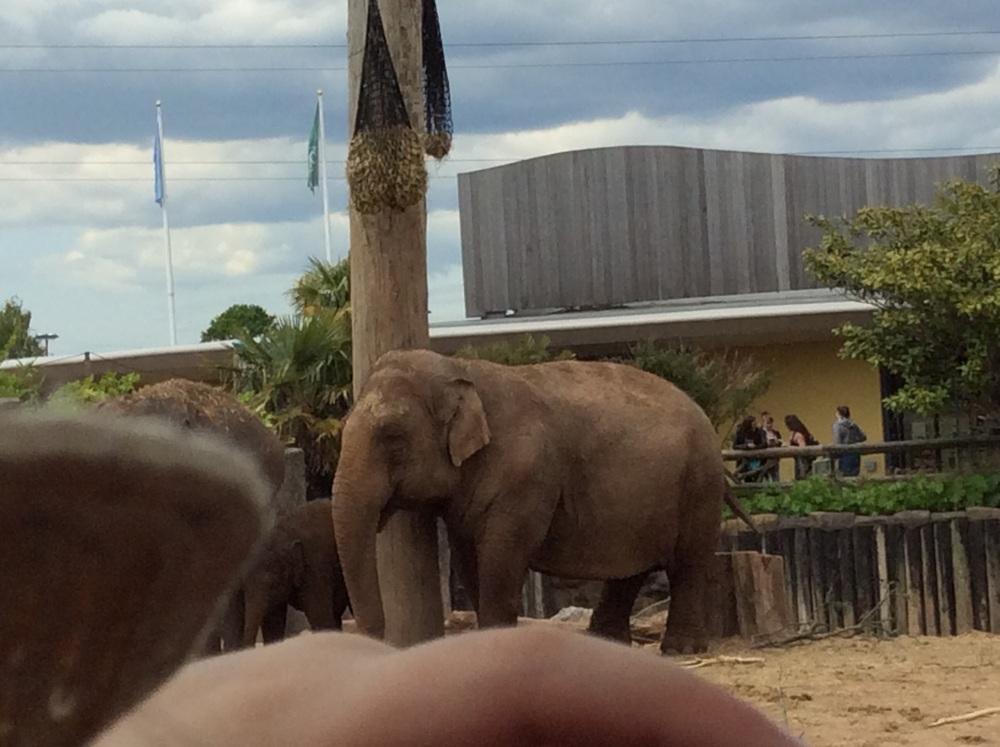 THATS AN ELEPHANT!