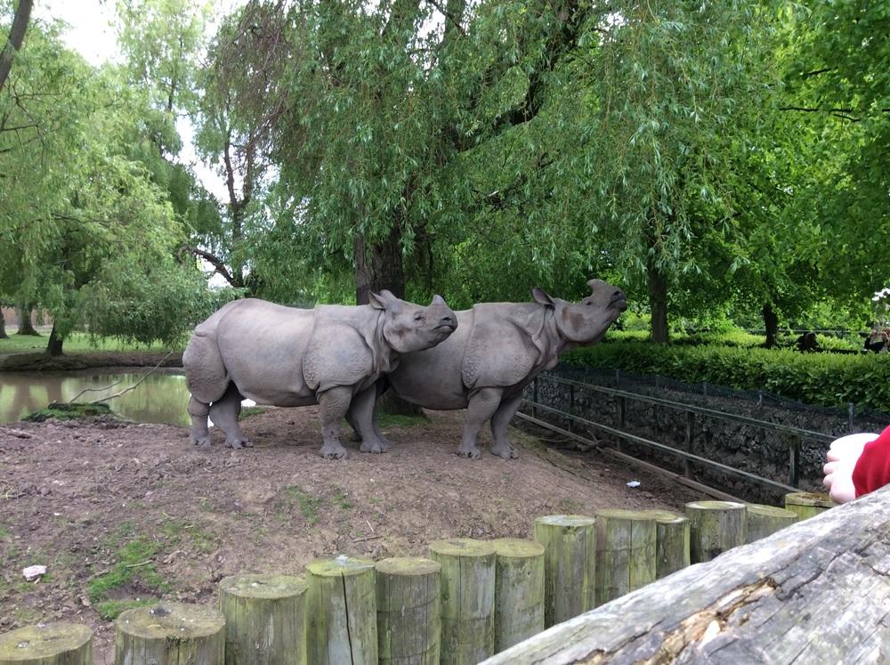 The rhino SUPER EPIC