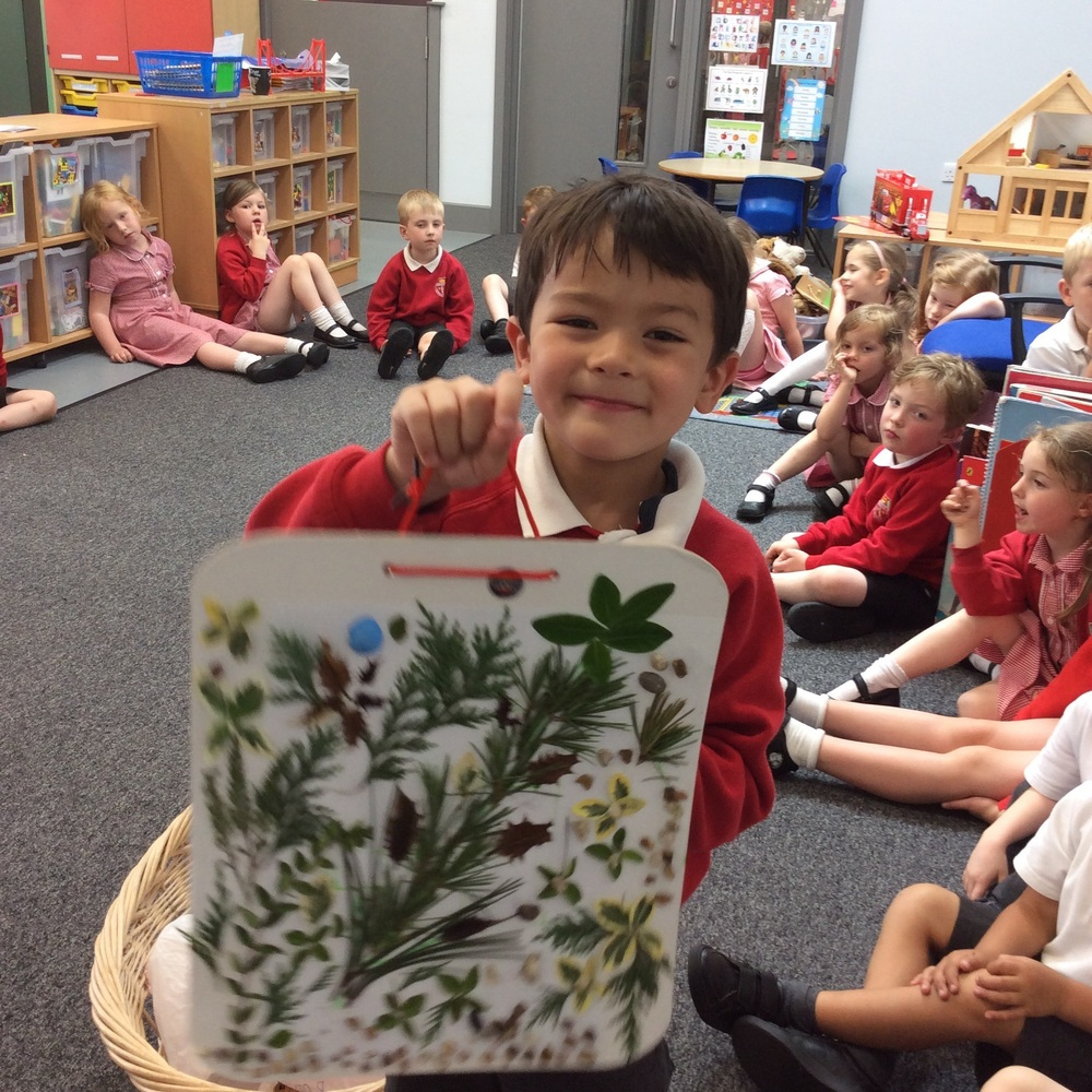 A board filled with natural objects to make a garden picture.