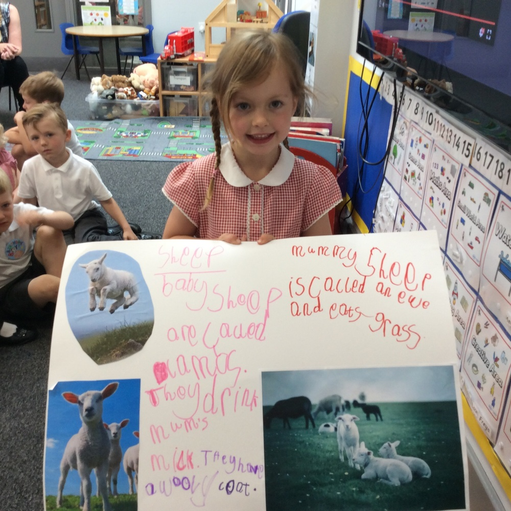 A piece of writing about sheep and lambs.