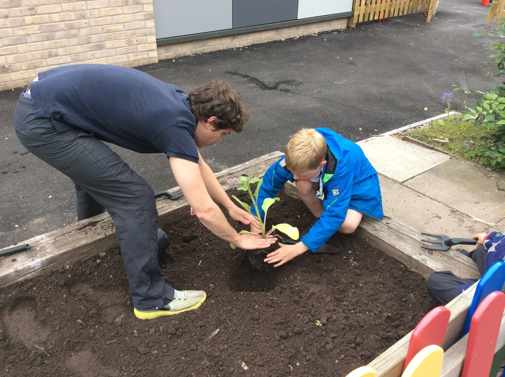 Mr Robinson demonstrating how to plant carefully.