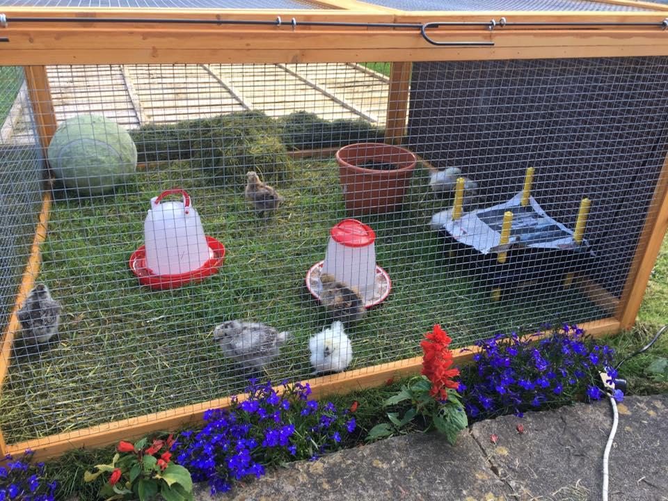 Happy chicks in the garden!