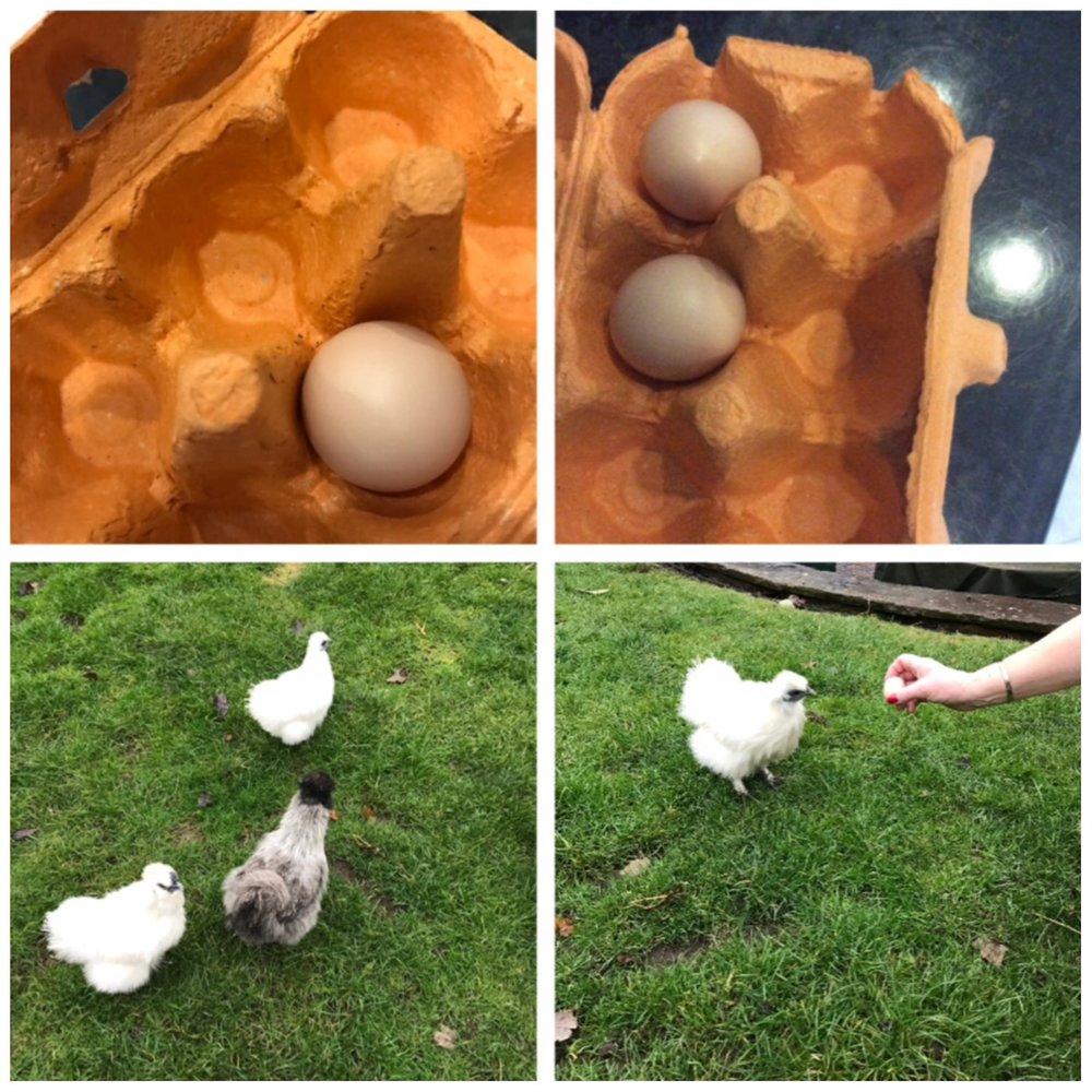 Top left: egg- 3/12/16  Top right: egg- 4/12/16  Bottom left: Delta, Jewel and Hedwig   Bottom right: Jewel and her prized possession