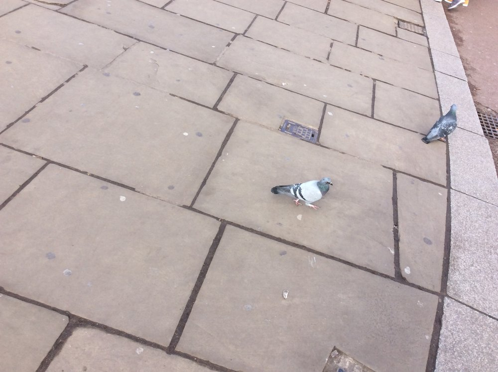 Meeting the locals.      7:20 Hungry like the wolf  We're finally back for tea. What a (long) day...     Thursday was was an amazing day. For the first time, Year 5 trips visited (the front of) Buckingham Palace, walked down the Mall, saw Nelson's Column in Trafalgar Square, walked across Westminster Bridge, sat in on debates in both Houses of Parliament, and performed a story map to an international (but slightly bemused) audience.  It was a fantastic day. And Mr Utteridge didn't sing on the way back to the hostel...yey!  See you tomorrow.