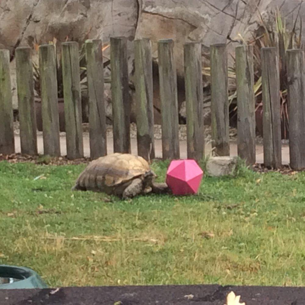 Tortoise vs Icosahedron. Who wins....?