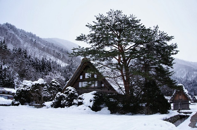 thatched-style roof house in shirakawa-go