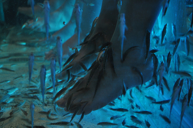 Different from the doctor fish tanks at Osso, this is a seemingly photo of blue UV lighting. Photo by: Flickr@Kullez