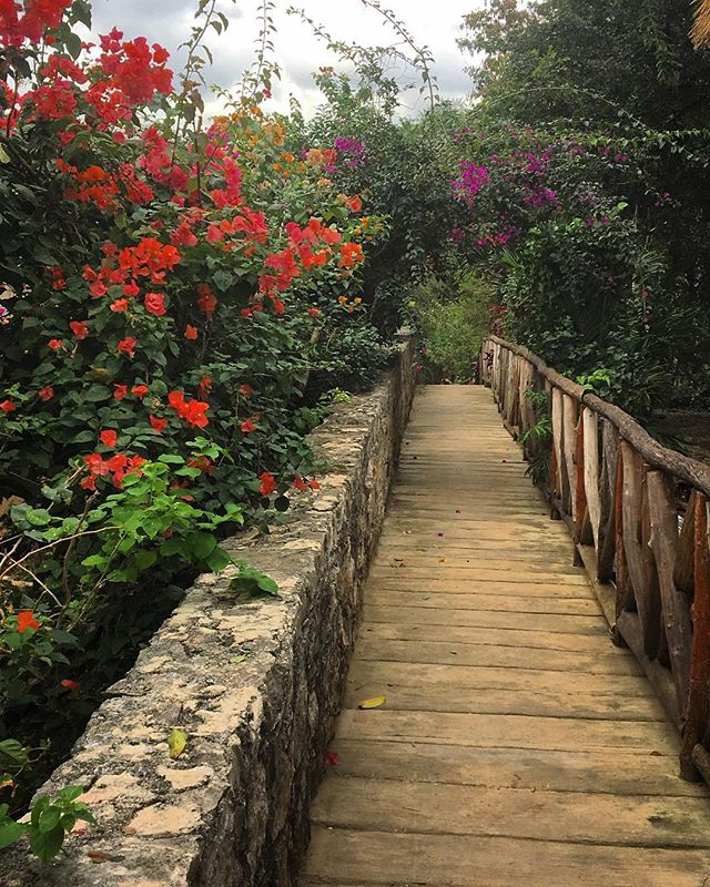 You never know what's around the corner... #Mexico #path #flowers #explore #travelpic #pathtocenote #stonewall #boardwalk #wanderlust #mexicanvillage #cbigrock #travelphotography #roam #naturephotography #nature #wonder #tranquility #walkabout