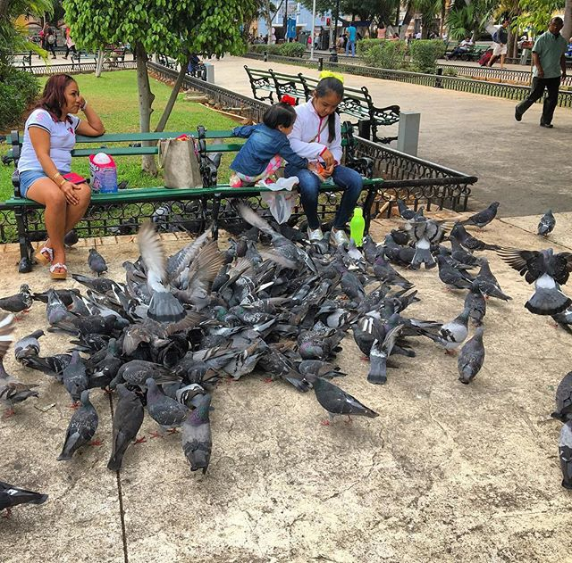 "Though her words are simple and few Listen, listen, she's calling to you ""Feed the birds, tuppence a bag Tuppence, tuppence, tuppence a bag"" - Julie Andrews aka Mary Poppins #merida #mexico #pigeon #travelphotography #travel #feedthebirds #mexican #park #peoplewatching #mexicanlife #naturephotography #nature #wanderlust #seetheworld #getoutside #yucatán #mayan #centrohistorico #cbigrock #julieandrews #marypoppins #roamtheplanet #wonder #explore"