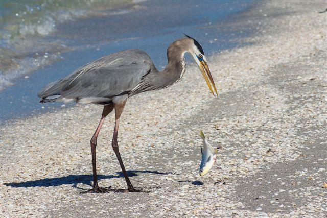 Bird on beach.jpg