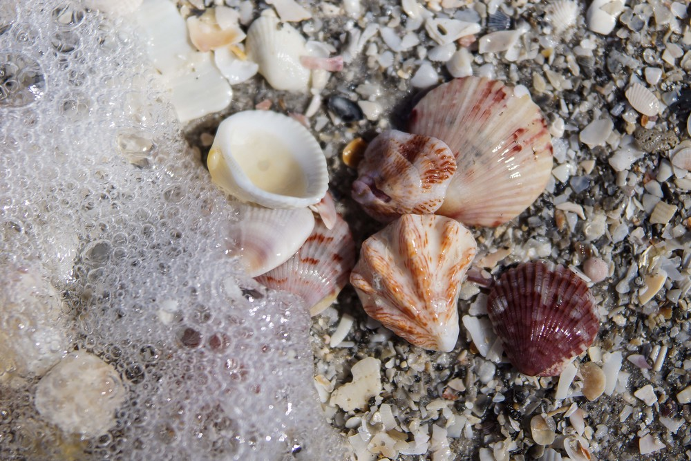 Shells on beach.jpg
