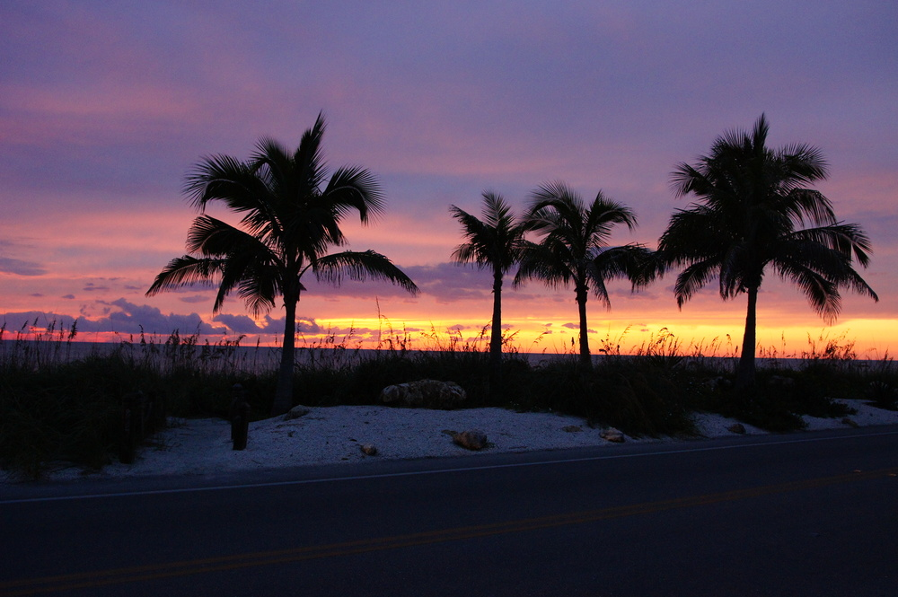 Sunset Palms (5).JPG