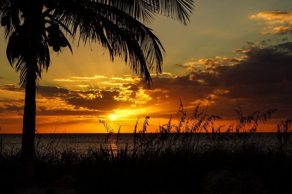 Palm at sunset.jpg