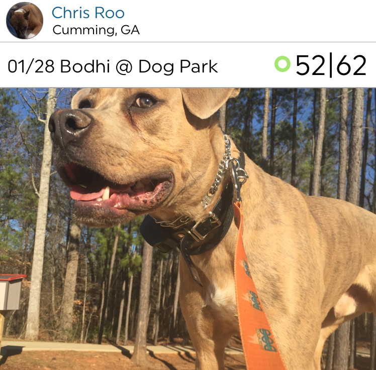 @ChrisRoo shares his pooch with us. Looks like Chris takes his dog on walks often! Who's working harder??