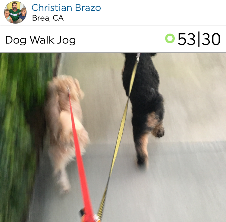 The dogs are back to work with @christianbrazo!
