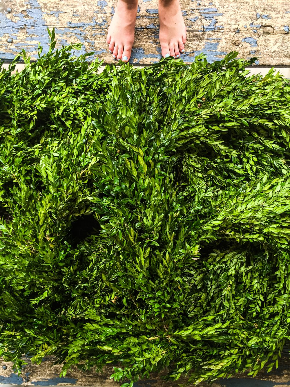 Boxwood Greenery
