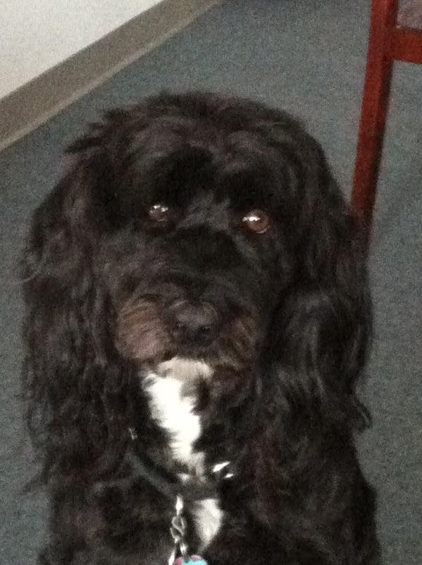 Macey-Canine Mascot